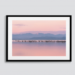 Pink Sands | Lancashire Photography Prints | CAlum Lewis Photography